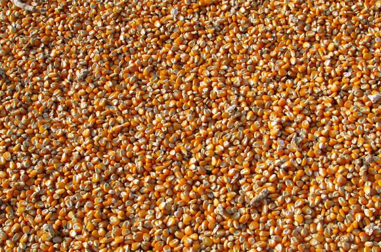 konfekcjonowanie nasion